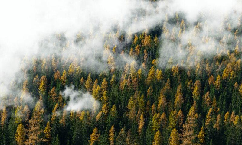 Holzvorkommen Bauboom Header